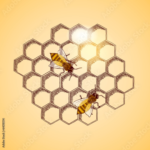 Honey bees and honeycomb background