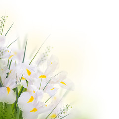 Yellow  irises with yellow daisies, floral background.