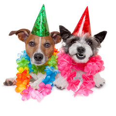 two funny birthday dogs celebrating close together as a couple