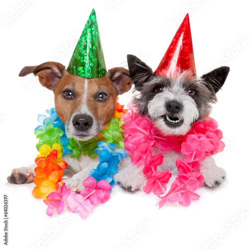 canvas print picture two funny birthday dogs celebrating close together as a couple