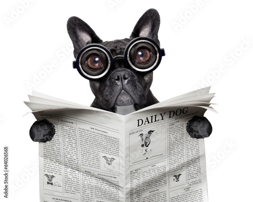 newspaper bulldog