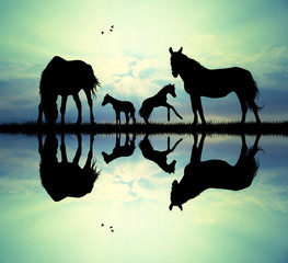 family of horse
