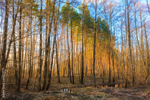 Beautiful Landscape. Spring Time Forest At Sunset
