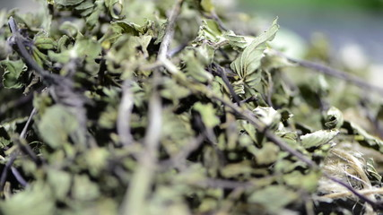 Portion of dried Mint (loopable video)