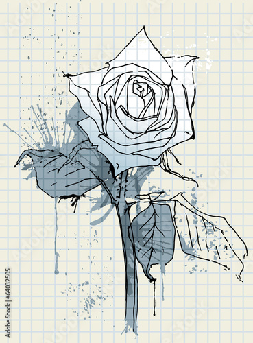 Dried rose. Hand drawing flower rose.