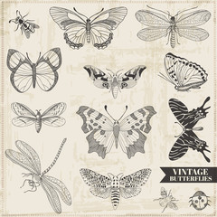 Vector Set: Calligraphic Hand drawn Butterflies