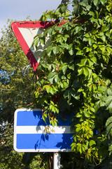 Дорожные знаки закрытые листвой