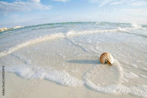 nautilus shell on a sea ocean beach sand with nice curve lens di