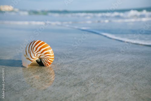nautilus shell on a sea ocean beach sand with  waves and reflect