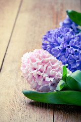 Beautiful hyacinth flowers on old wooden background, border