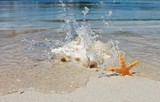 conch and starfish on beach