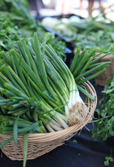 basket of scallions