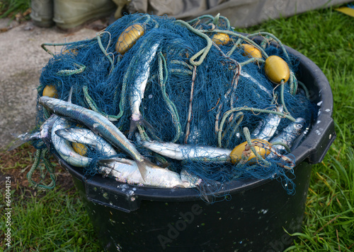 A bucket with gillnets and a catch of herrings.