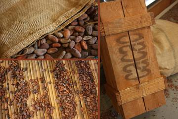 CACAO  Fève de Cacao