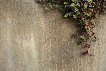 climber on cement wall with space on the left