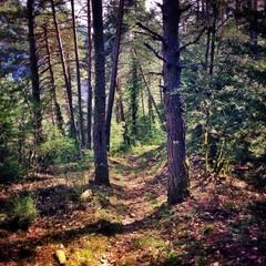 camino entre los arboles del bosque