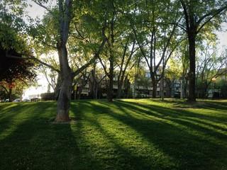 sombras de arboles en un parque al atardecer