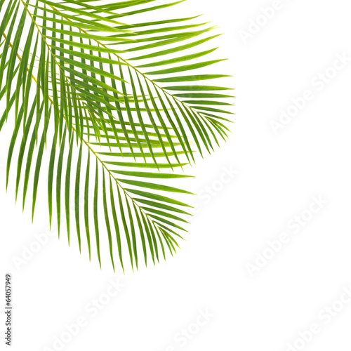 Foto op Plexiglas Palm boom green palm leaves