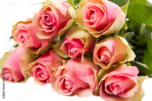 Pink roses isolated on white background