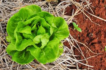 baby green salad on soy