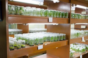 plant tissue culture in the laboratory