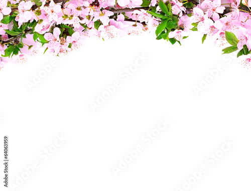 apple flowers branch on a white background