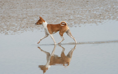reflection as dog paces on sand