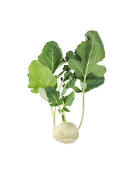 kohlrabi  cabbage with green leaves, isolated