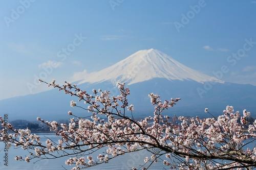 Mt Fuji i Cherry Blossom