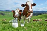 Milk and cows. Emmental region, Switzerland - 64072773