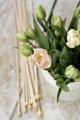Bouquet of delicate pink tulips with knitting needles