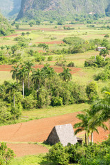 Agriculture at the Vinales Valley in Cuba