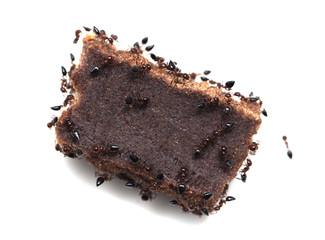 ants eat candy. macro