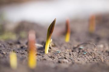 flower seedlings. macro