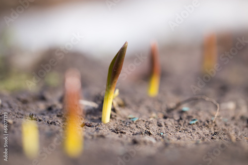 flower seedlings. macro