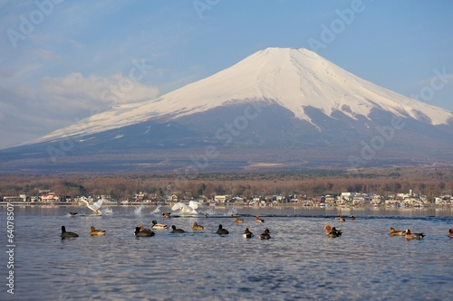 White Swan and Mt Fuji