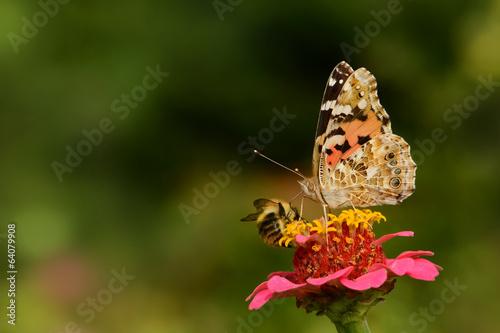 Foto op Plexiglas Bee Schmetterling 120