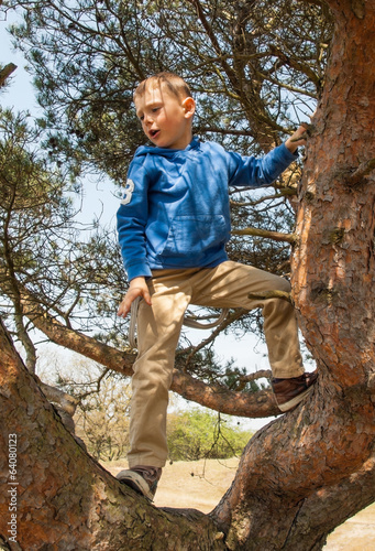 small boy climbing in a tree