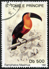 Stamp shows bird(ramphatos maximus)