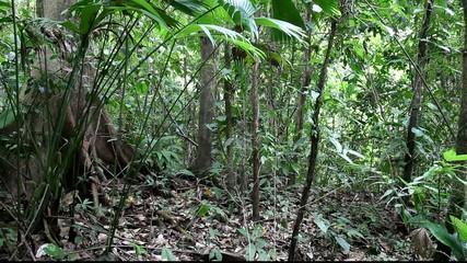 Panorama of jungle in Costa Rica