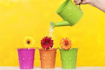 watering a flower