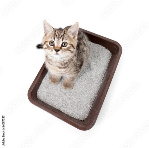 kitten cat in toilet tray box with litter top view isolated on w