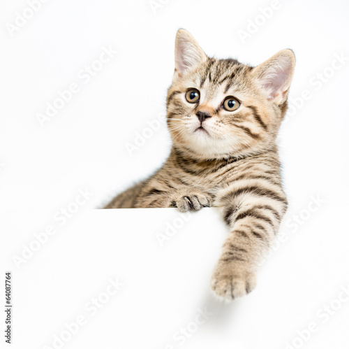 kitten behind white signboard isolated