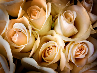 A bouquet of cream roses.