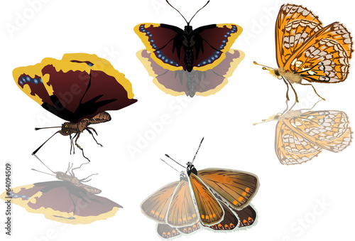four orange and brown butterflies isolated on white