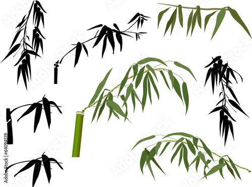 isolated green and black bamboo leaves
