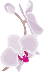 Blooming orchid branch