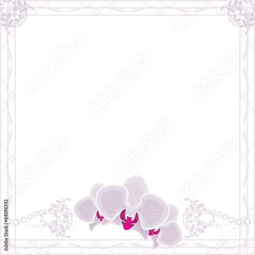 Orchid flowers in ornamental frame