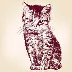 cat  - hand drawn vector llustration isolated © vladischern