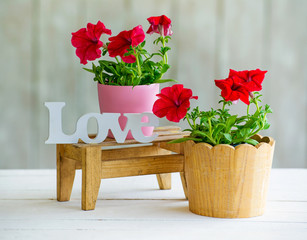 Still life with spring petunia flowers and wooden handmade word